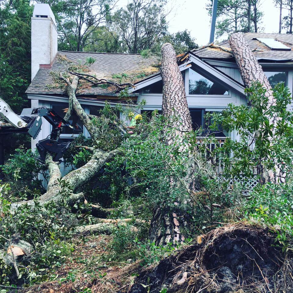 Tree Removal Peachtree City