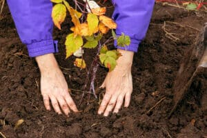 Why Fall is the Best Time to Plant Trees
